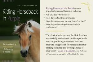 horse, horse rescue
