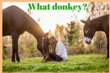 Does focus mean you miss the donkey